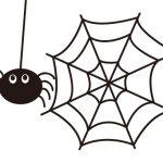 蜘蛛嫌いの方必見!家の中への侵入対策をご紹介